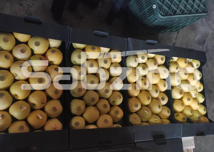 صادرات سیب به روسیه