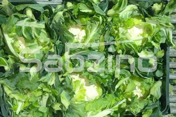 صادرات گل کلم مرغوب