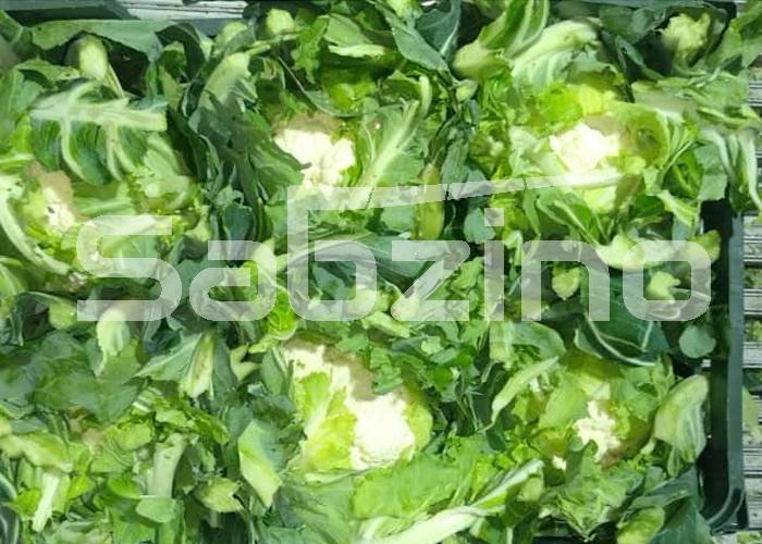تولید گل کلم ایرانی