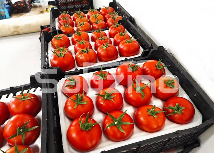 صادرات گوجه