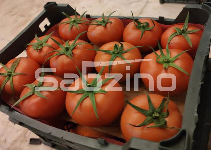 صادرات گوجه به عراق