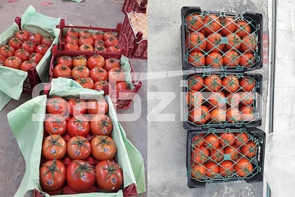 صادرات گوجه به روسیه